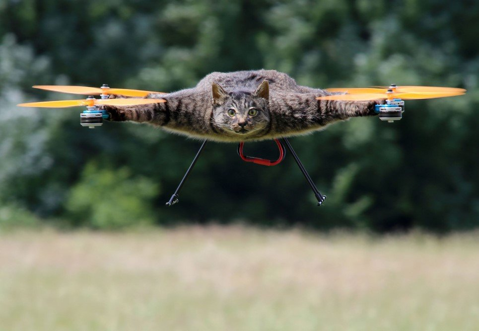 57. Dutch artist Bart Jansen turns his dead cat into remote controlled helicopter, London, UK – June, 2014.