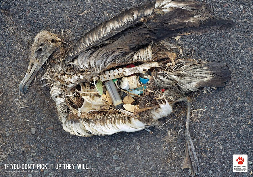 Bird Conservation: If You Don't Pick It Up They Will