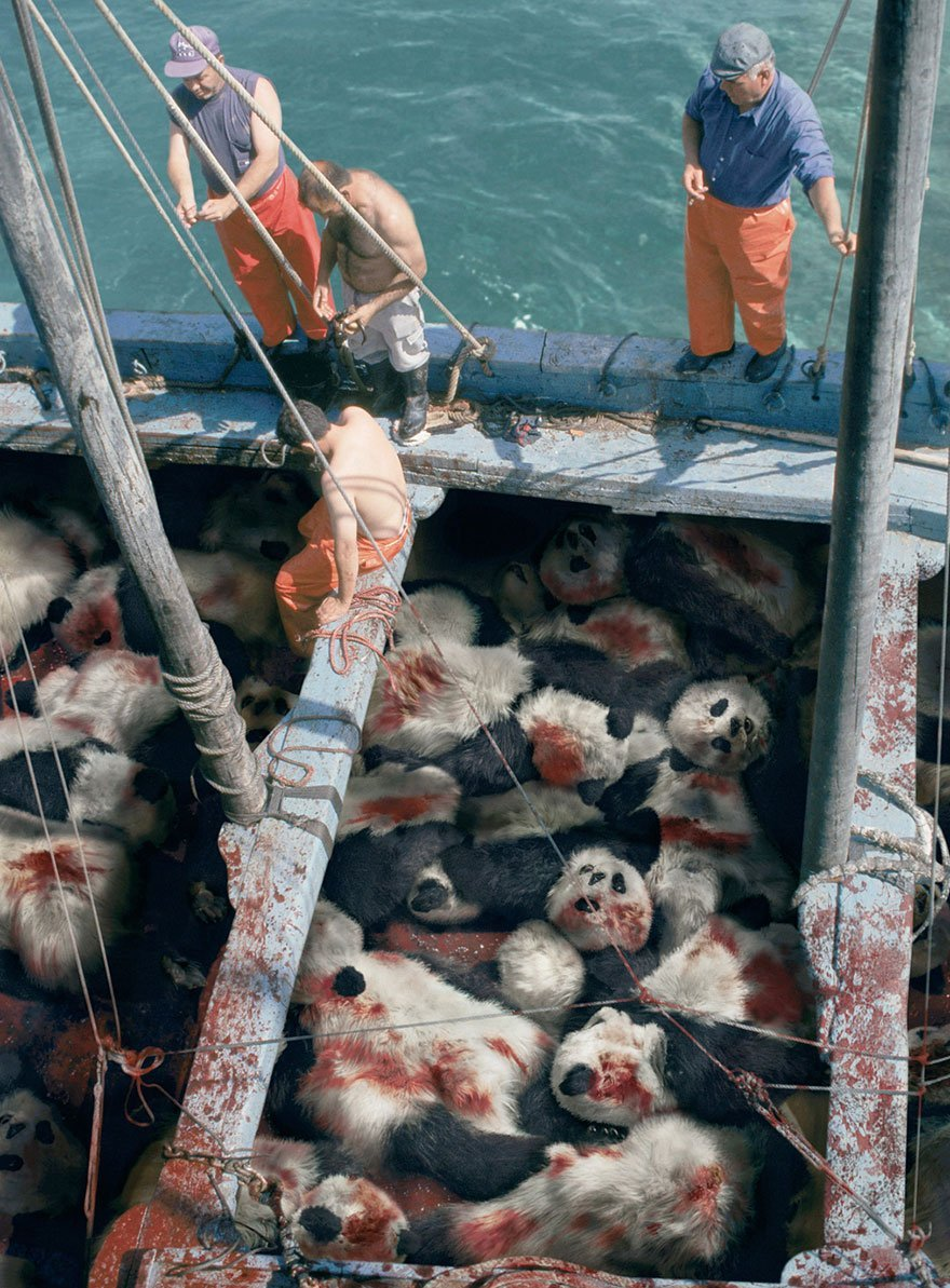 Sea Shepherd Conservation Society: When You See a Tuna, Think Panda