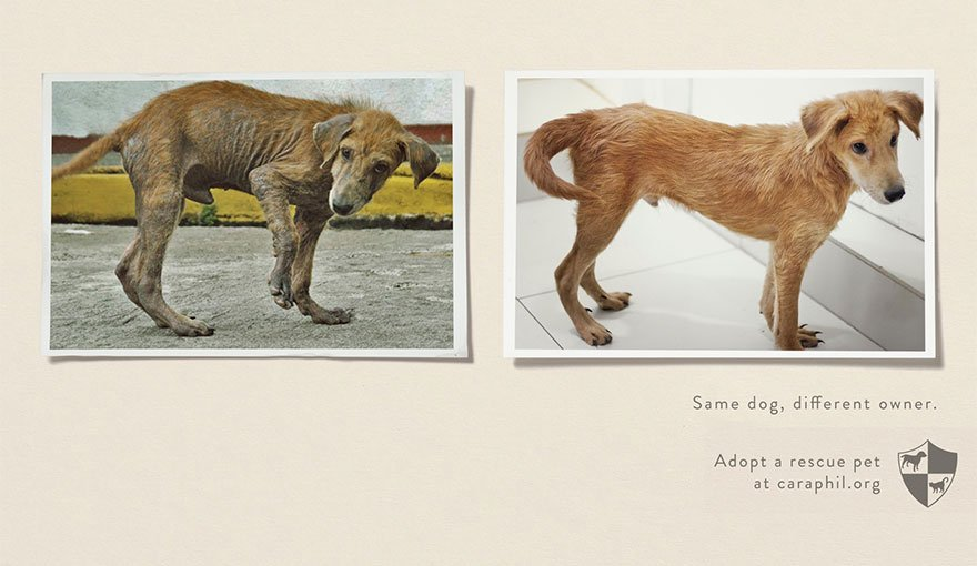 Animal Abuse and Shelters: Same Pet, Different Owner - Powerful Ads