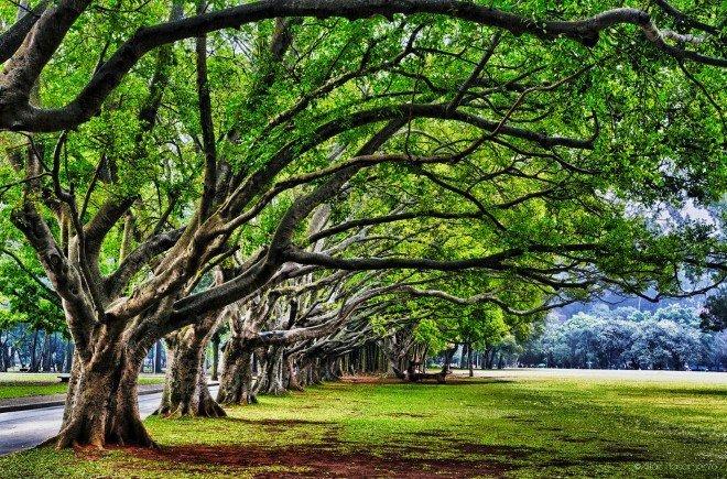 Ibirapuera Park