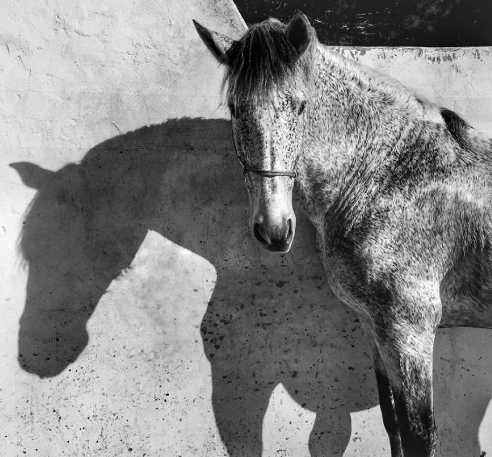 "The photo is shot after a dressage-clinique at the stable ""Cuadra de la luz"" in Chiclana de la Frontera , Andalucia,  Spain. The horse in the photo is my horse, Yeguizo. He was resting and drying on the sun, looking at me."
