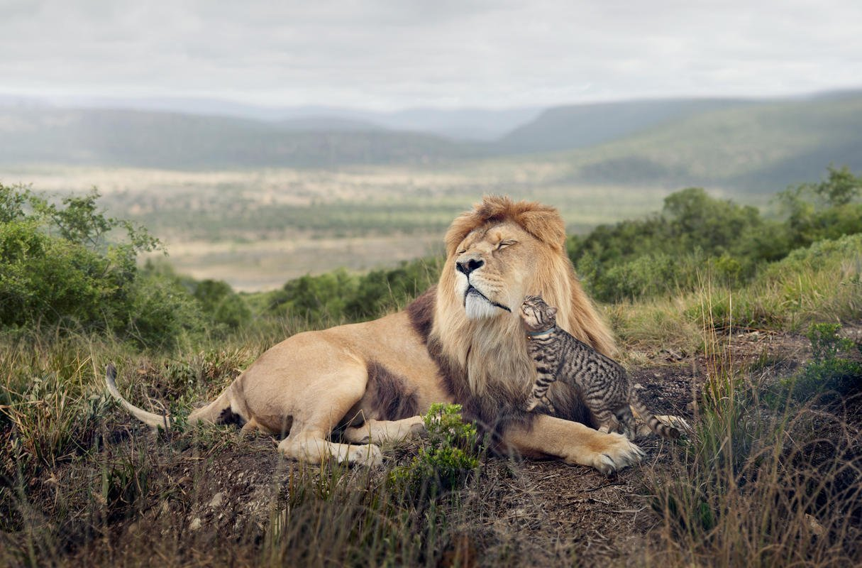 3. 'Big Cat, Little Cat', shot by George Logan, is part of an advertising campaign for Whiskas cat food and is a shortlisted entry in the Campaign category (George Logan/Sony World Photography Awards)