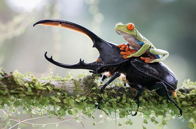 29.A knight and his steed: a tropical capture in Costa Rica. (Nicolas Reusens/2014 Sony World Photography Awards)