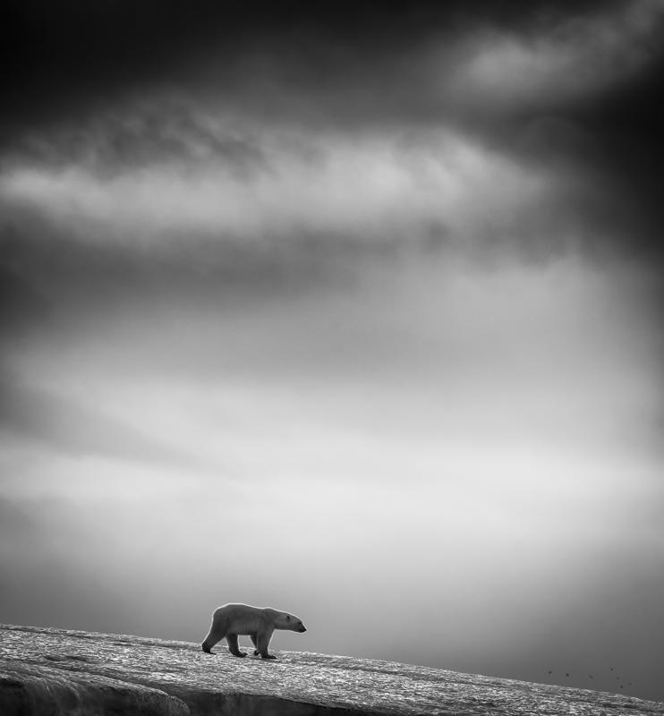 9.This sample from a series of black and white photographs, entitled 'Bears and Birds', was taken in Svalbard, Norway, by Wilfred Berthelsen. Berthelsen is a finalist in the Travel category (Wilfred Berthelsen/Sony World Photography Awards)
