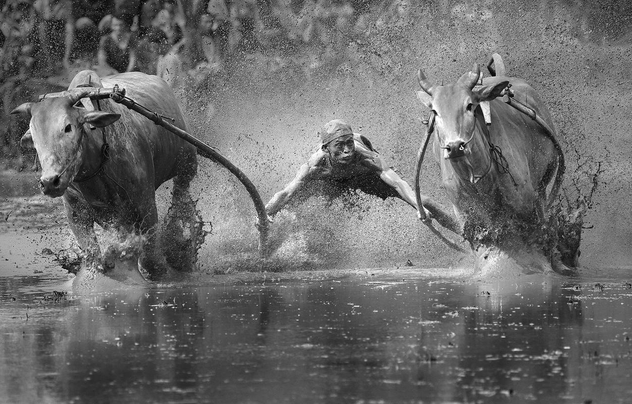 1.A stunning picture of a man diving into a lake, holding onto two bulls, is a finalist in the Sports category of the Sony Photography awards. (Yong Sheng Zheng/Sony World Photography Awards)