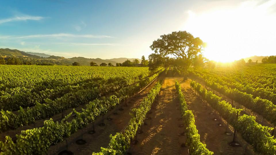 20. Sunset on a vineyard in Santa Inez, California, USA