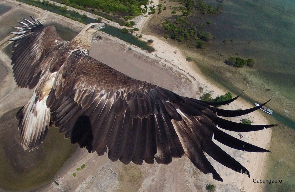 5. A drone catches a soaring eagle in mid-are in the Bali Barat National Park, Indonesia.