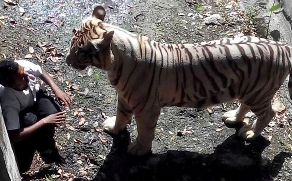24. A white tiger attacked and killed a schoolboy who accidently fell into its enclosure at a zoo in Delhi - September 23, 2014.