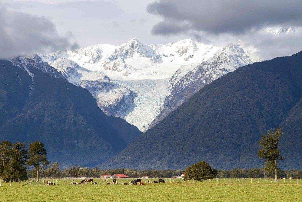 Fox Glacier, New Zealand (3)