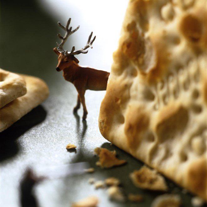 Miniature Food Photography (12)
