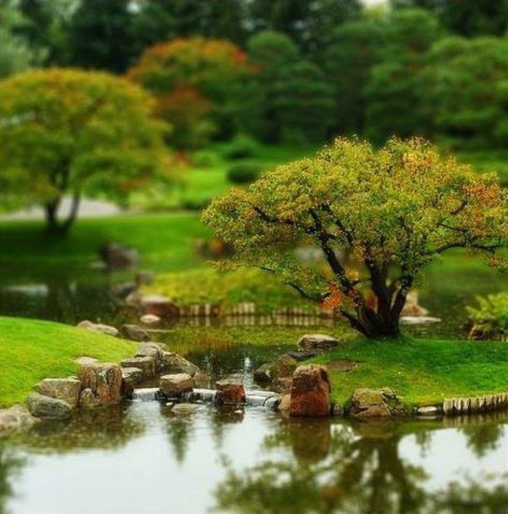 Tilt-Shift Tree at Nikka Yuko Japanese Garden by Stroke and Distance