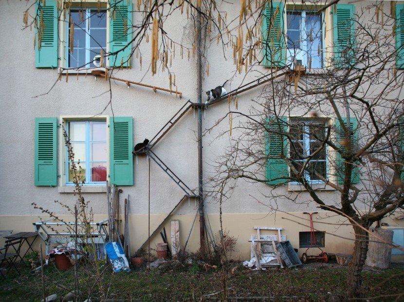 Cat ladders by Brigitte Schuster