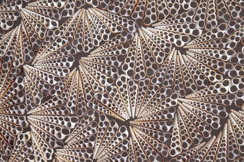 Seashell sculpture by Rowan Mersh