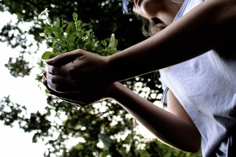 Planting a tree to save the climate