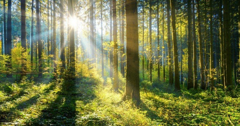 Trees are the only viable solution to climate change