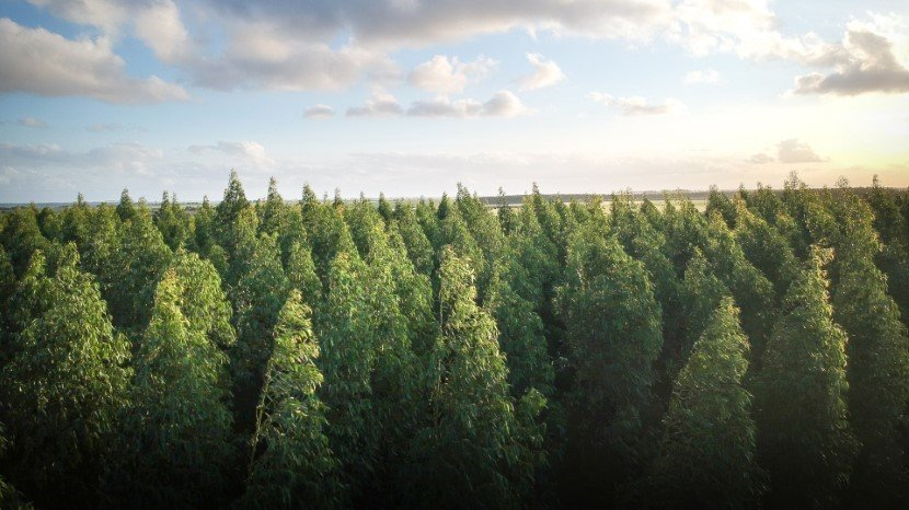 Planting a trillion trees to save the climate