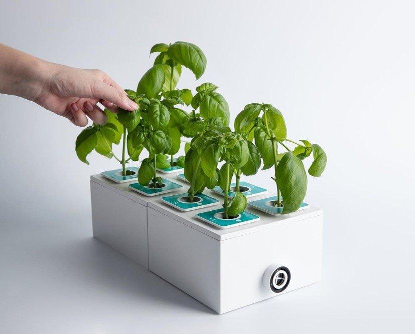 Planty Cube