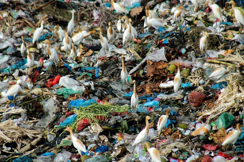 Fachrul Reza (via The Guardian) - Plastic Eating Bacteria