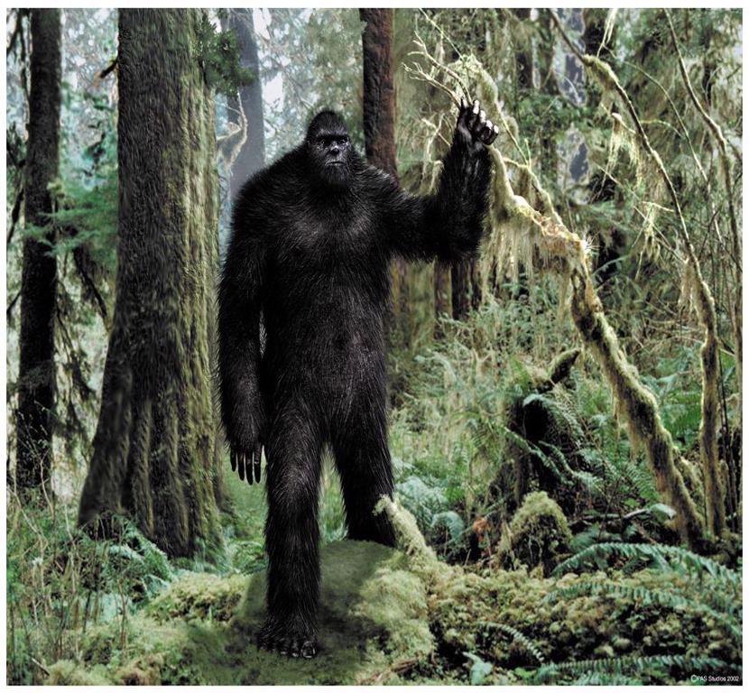 Bigfoot Sightings - cover